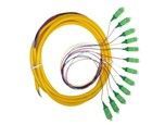 Bundle Fan out Fiber Patchcord, SC 12 Cores Bundle Fan out Fiber pigtail